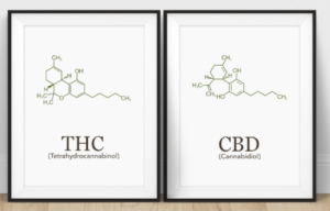 THC and CBD molecule posters in black frames